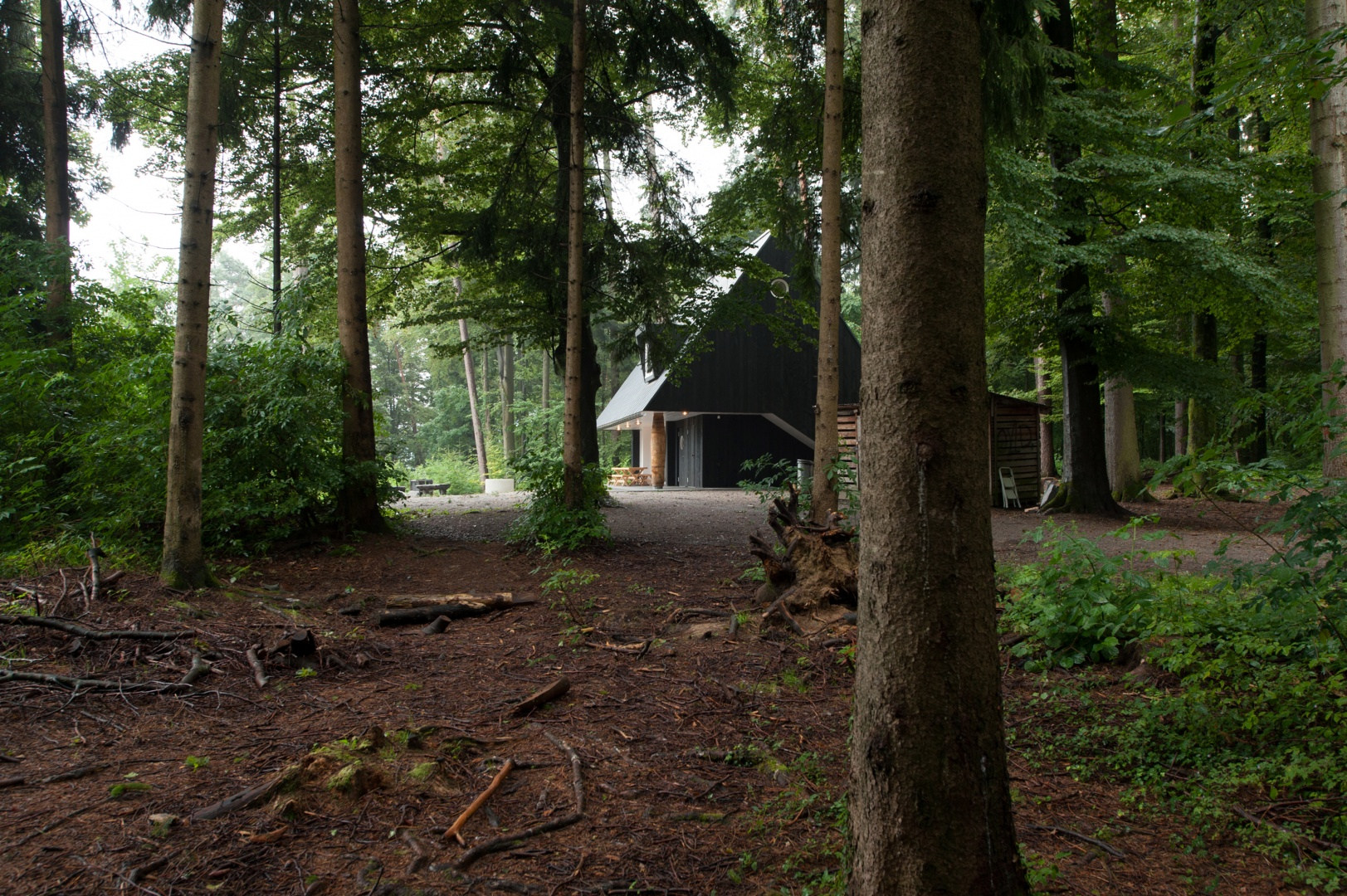 Situation Waldlichtung Felix Aeberli Fotograf